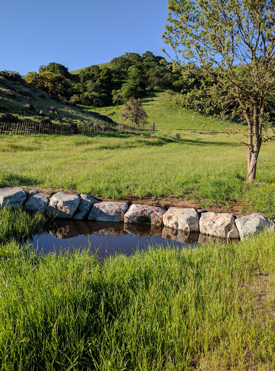 Coyote Valley Open Space Preserve South Meadow Restoration