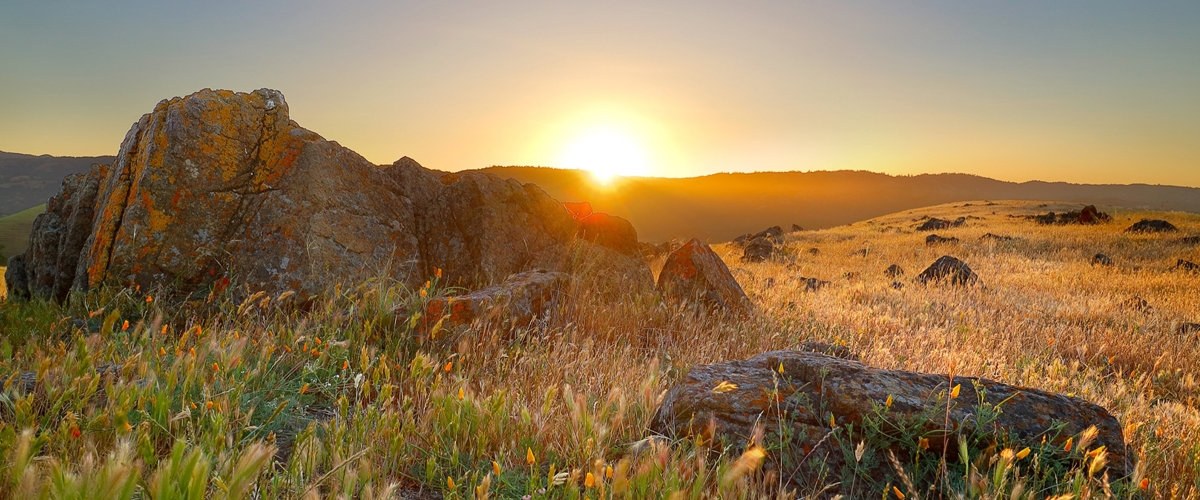 Sunrise over golden field and lichen-covered rocks