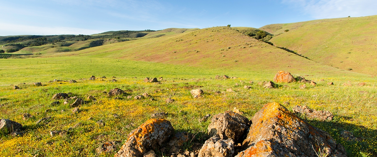 Green fields covered in rocks and yellow wildflowers leading up to rolling green hills under a clear blue sky