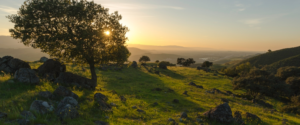 Sunset over green grassy hill with rocks and oak trees