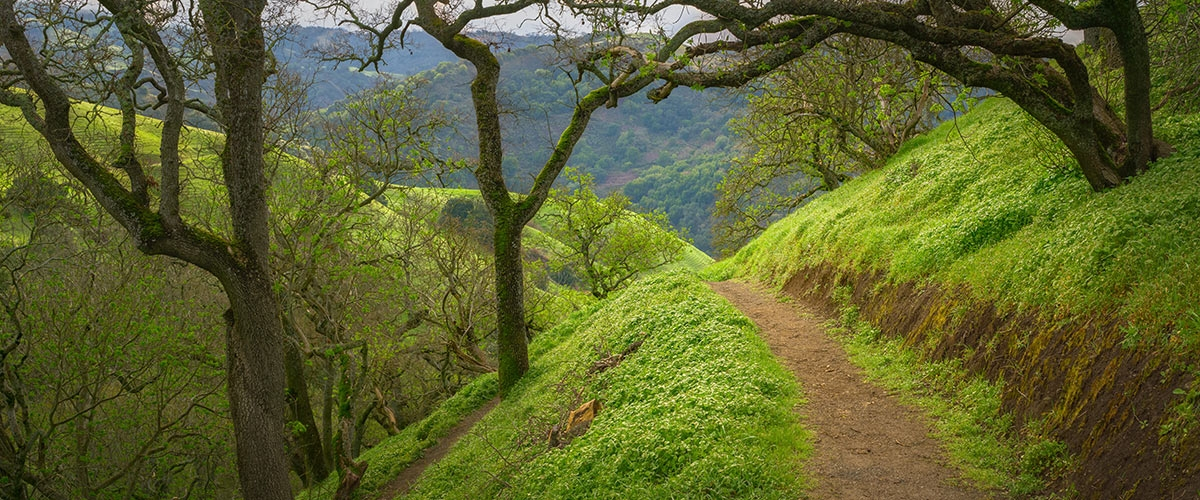Dirt trail leading through lush green forest with hills in the background