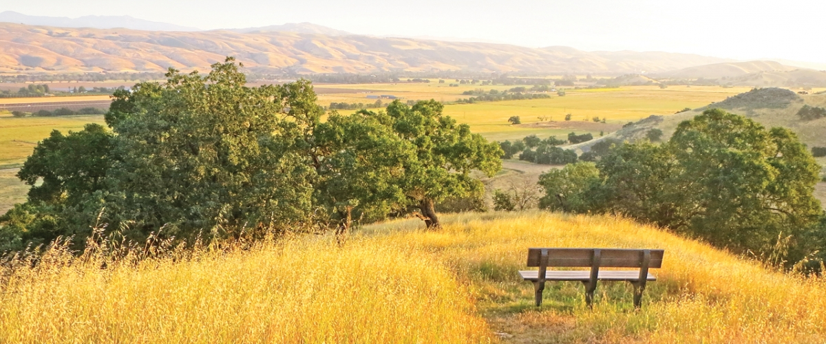 Bench on top of hill covered in golden grass, overlooking oak trees and expansive golden Coyote Valley below