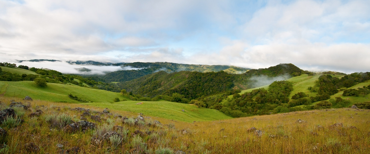 Green hillsides covered in dark trees under a blue sky with fog rolling across the landscape