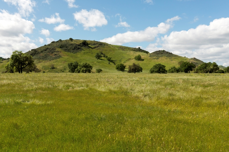 Looking across a lush green meadow towards large oak trees and rolling green hills under a blue sky with fluffy white clouds