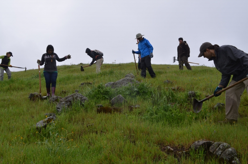 Seven volunteers with jackets and hoes clearing weeds on a green hillside under an overcast sky