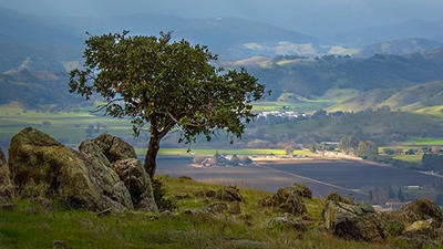 Small tree and rocks at top of ridge overlooking fields and Coyote Valley below