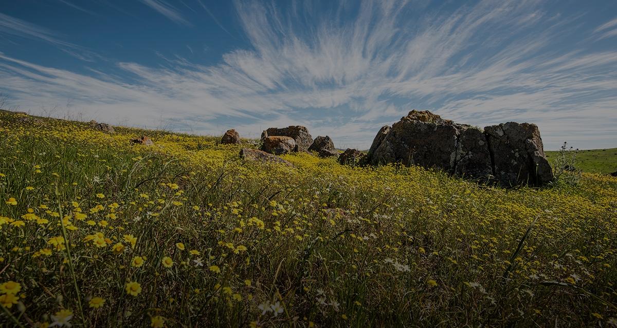 Coyote Ridge