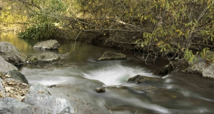 Coyote Creek with water rushing over stones and under trees with yellow leaves