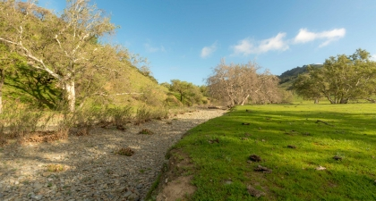 Dry, gravel creekbed curving through green field with sycamore trees