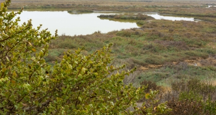 Looking across marshland covered with green and brown shrubs and patches of water