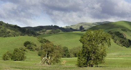 Rolling green hills with scattered trees under cloudy sky