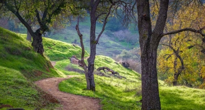 Dirt trail twisting through green hillsides and grove of trees at Coyote Valley