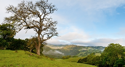 Rancho Cañada Del Oro's rolling green hills and oak trees under a pale blue sky with wispy clouds