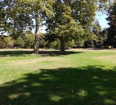Bowers Park grass field with sycamore trees