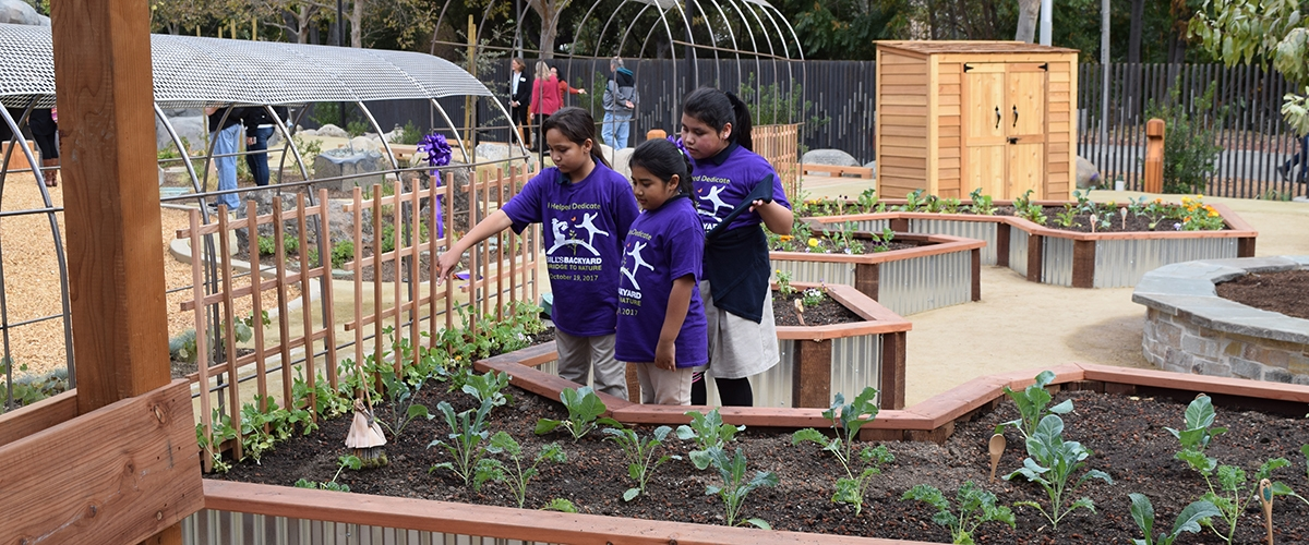 Students in purple shirts playing in Bill's Backyard outdoor area