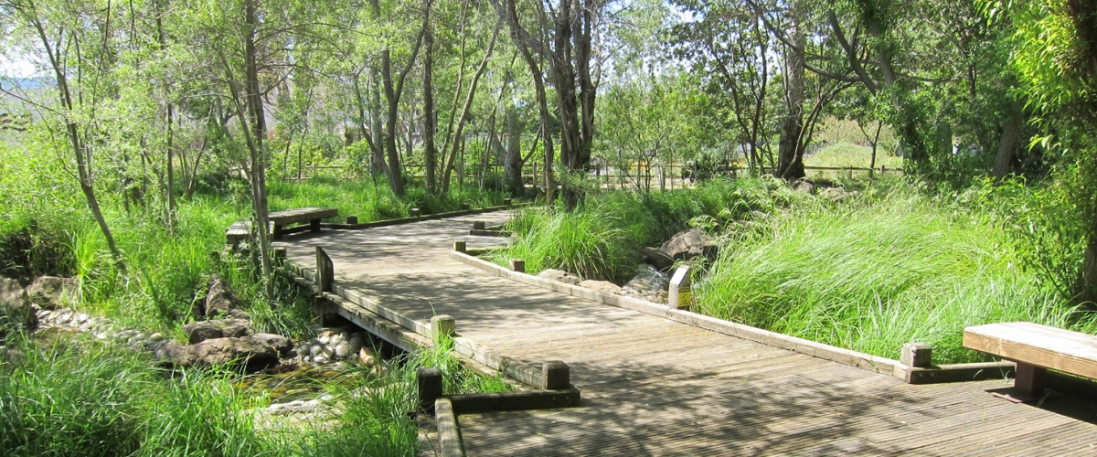 Edith Morley Park with raised wooden walking boardwalks through green trees and over a creek