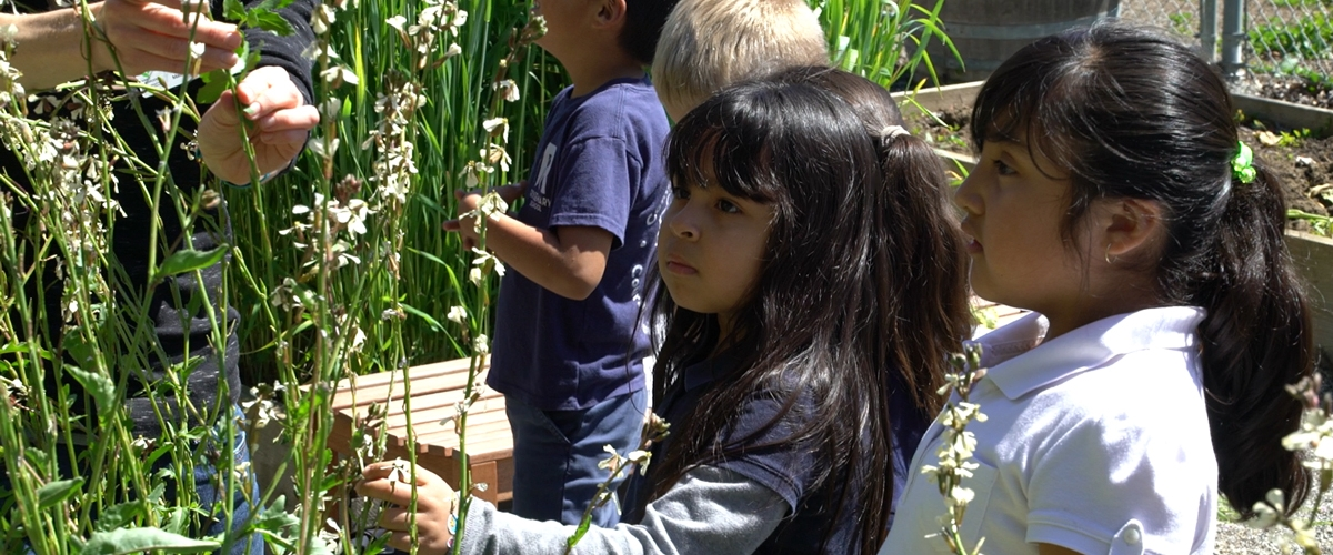 Students in garden looking at plants