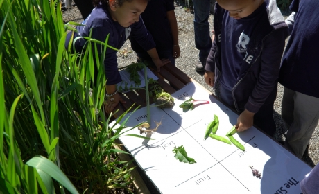 Students doing plant science activity in garden