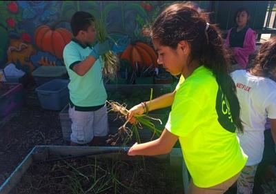 Students working in garden next to raised garden bed