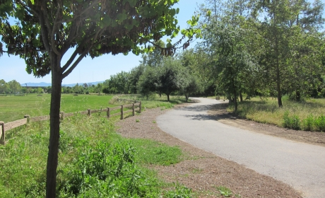Paved trail at Selma Olinder Park leading through green field and trees