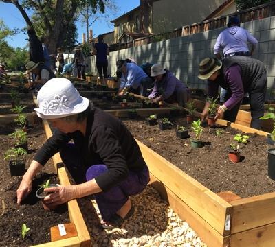 Community members placing plants in raised garden beds