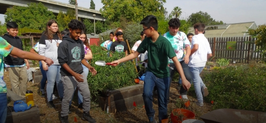 Group of student youths working in garden