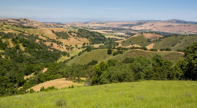 Landscape view of hills at Tilton Ranch covered in green grass and oak trees