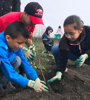 Three third grade students placing small plant in ground in agricultural field