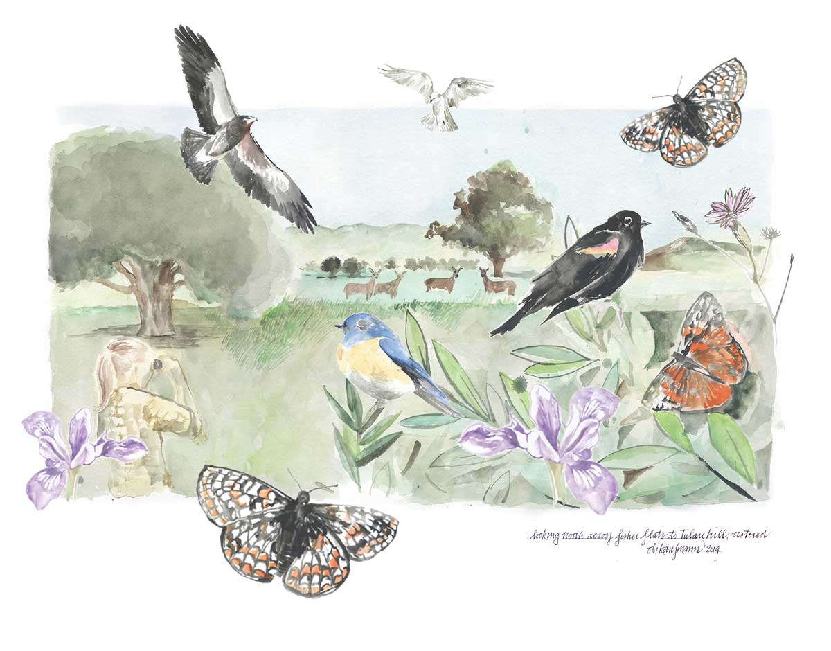 Watercolor illustration of a restored North Coyote Valley with butterflies, raptors, deer, blackbirds, flowers, grasses, and woman watching through binoculars