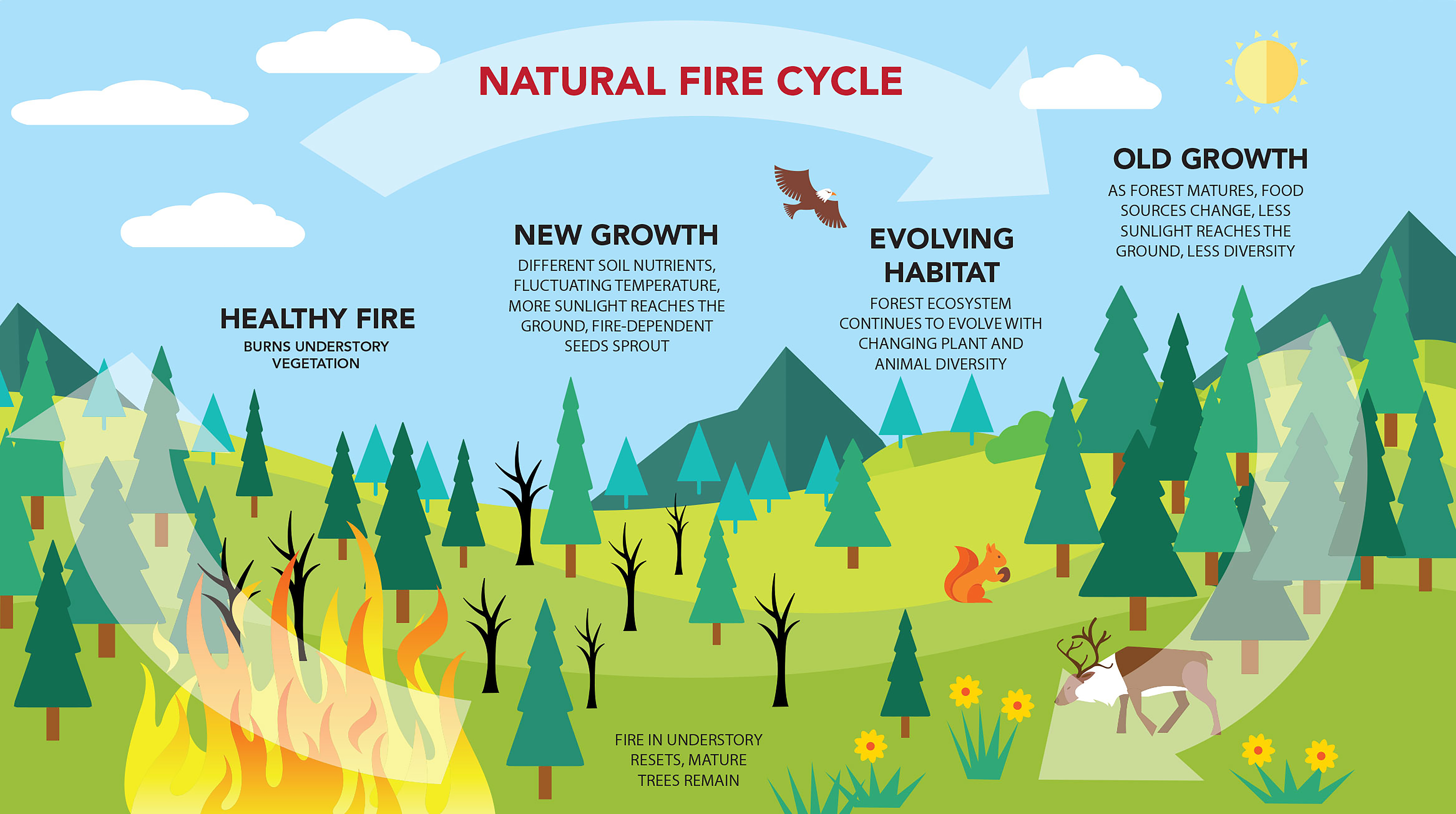 Check out the Natural Fire Cycle