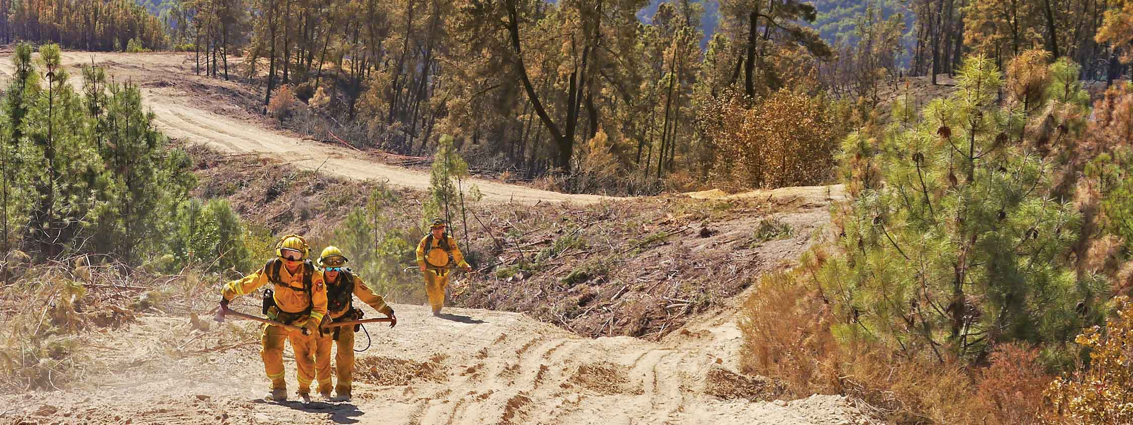 Firefighters in yellow uniforms walking uphill on dirt trail through forest