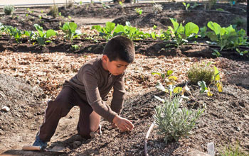 Young boy in brown shirt and pants kneeling next to plants in vegetable garden