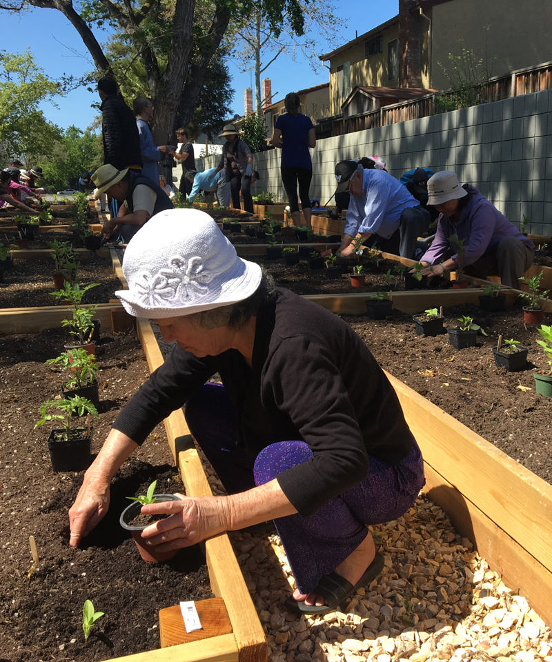 Woman in white hat planting in community garden bed