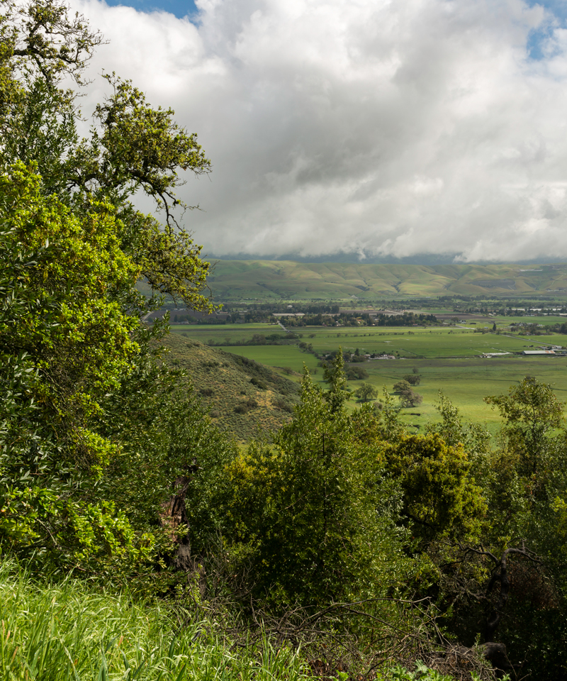 Trees and green landscape of Coyote Valley