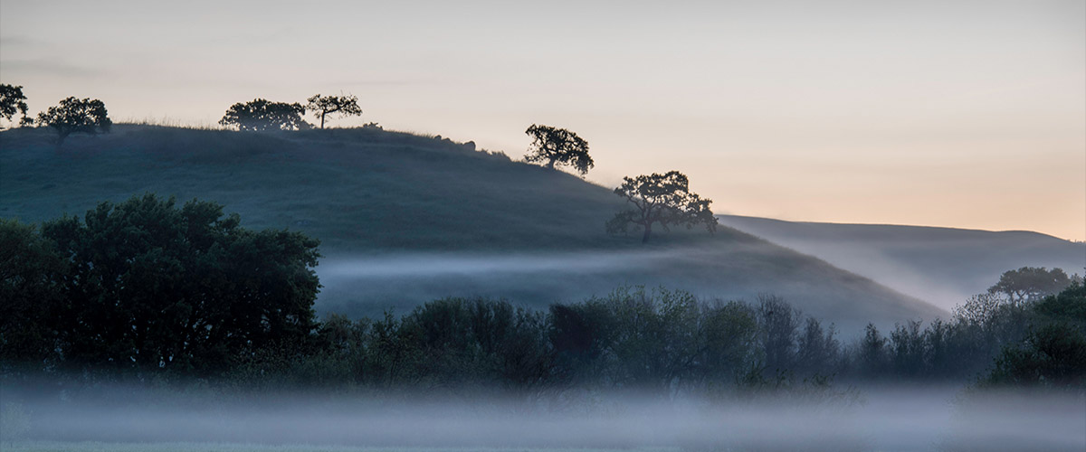 Early morning view of hills with scattered trees rising out of the mist